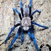 TarantulaRoom